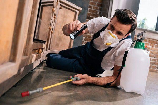 یکی از راههای مؤثر درمان بیدزدگی فرش استفاده از حشرهکش است